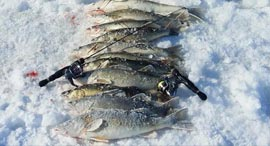 Fish caught while ice fishing