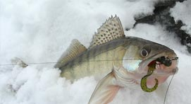 What to Bring when ice fishing on Saginaw Bay